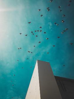 Pájaros volando en cielo azul